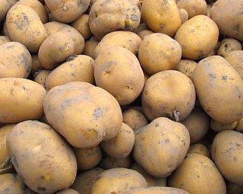 インカのめざめ(Potato)